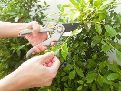 Péče o zahradu ve 4 krocích